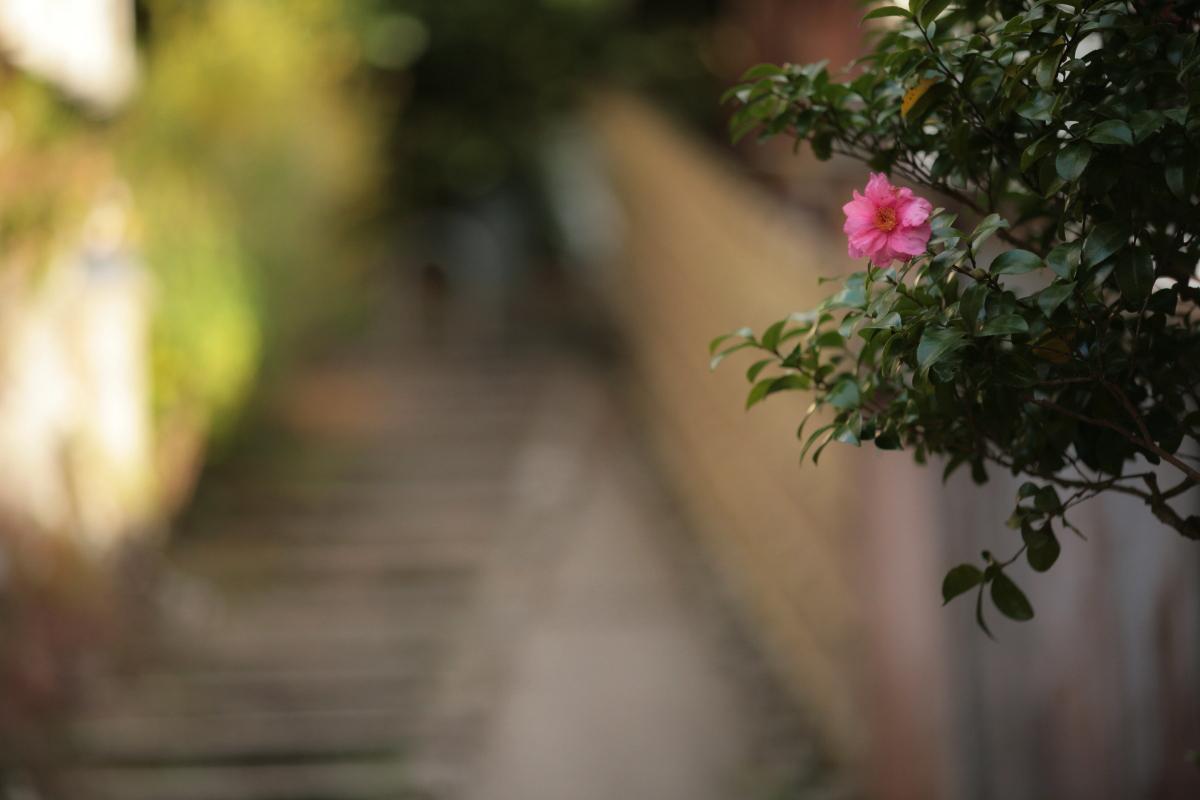 京都スナップ  1_f0021869_1253286.jpg