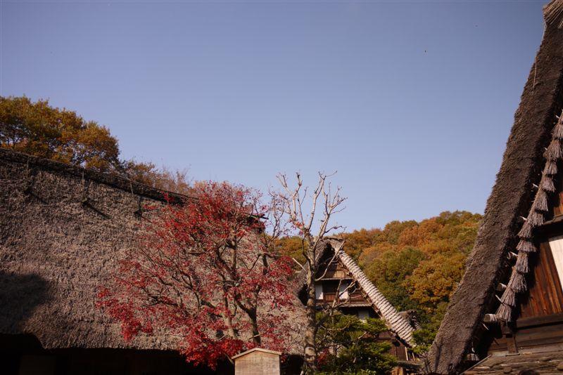 古民家と紅葉(生田緑地)_b0175688_15281349.jpg