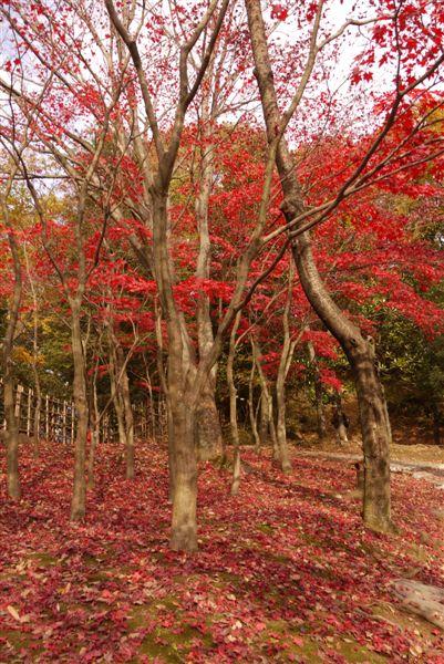 古民家と紅葉(生田緑地)_b0175688_1534509.jpg