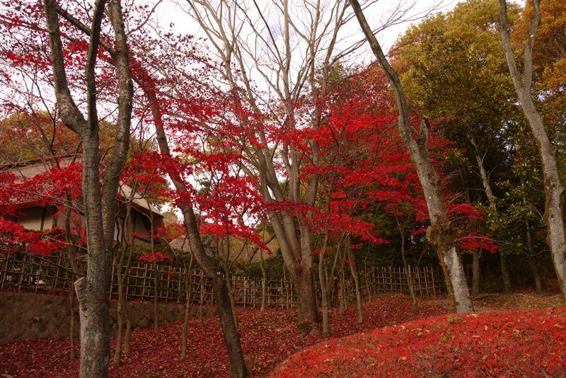 古民家と紅葉(生田緑地)_b0175688_15345713.jpg