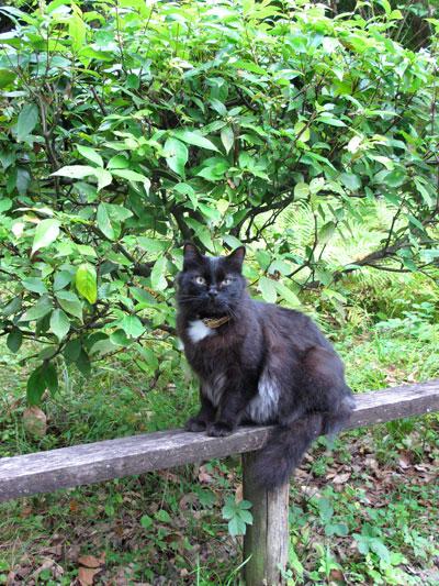 とある場所で出逢った猫。_c0108595_914035.jpg
