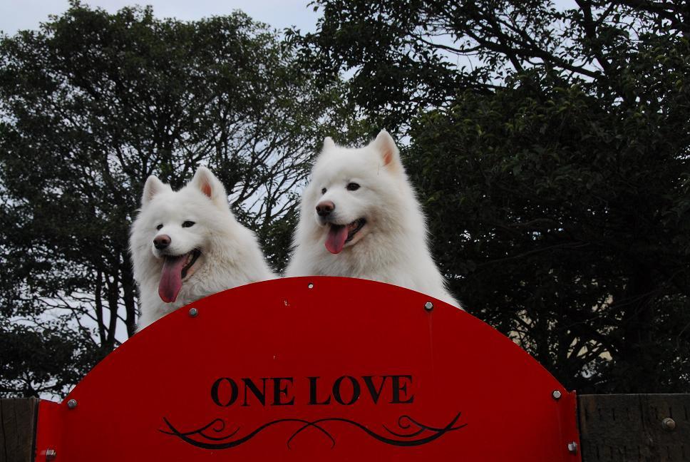 ONE LOVEへ  part1_a0049296_6425225.jpg
