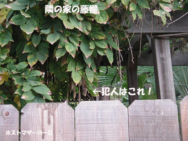 a0128329_1432169.jpg