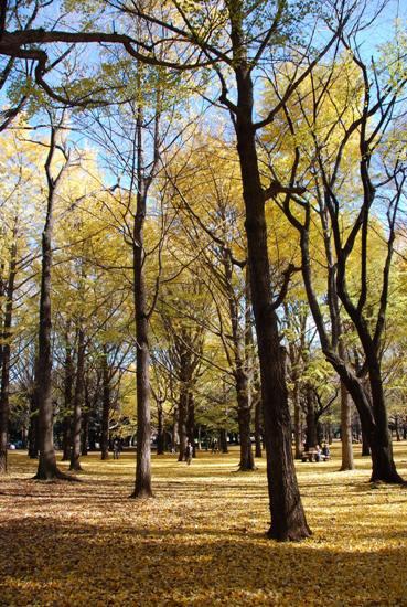 秋の公園にて_c0099133_23212637.jpg