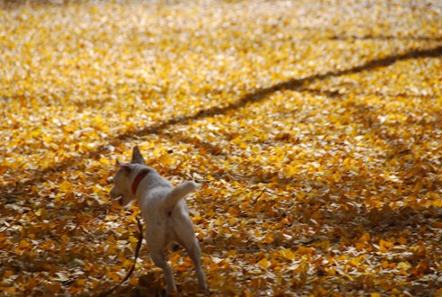 秋の公園にて_c0099133_2321352.jpg