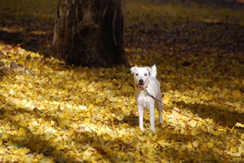 秋の公園にて_c0099133_23214397.jpg