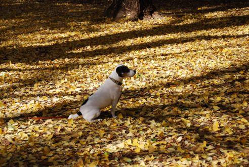 秋の公園にて_c0099133_23222364.jpg