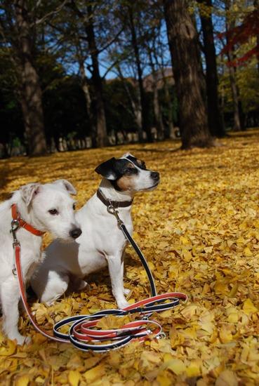 秋の公園にて_c0099133_2322392.jpg