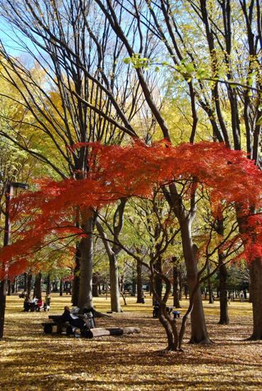 秋の公園にて_c0099133_2322425.jpg