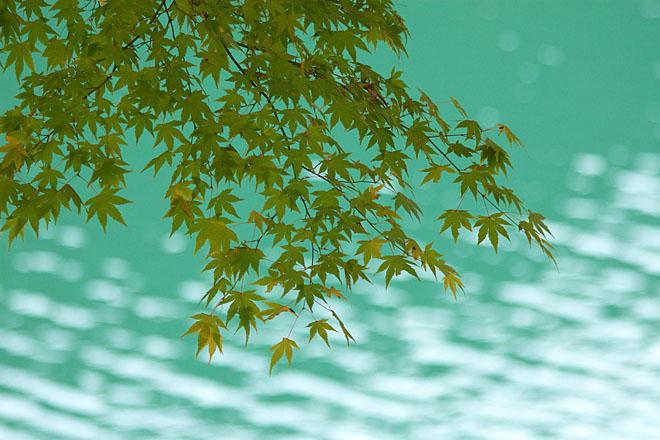 湖畔の秋~生野銀山湖~_c0067040_21563736.jpg