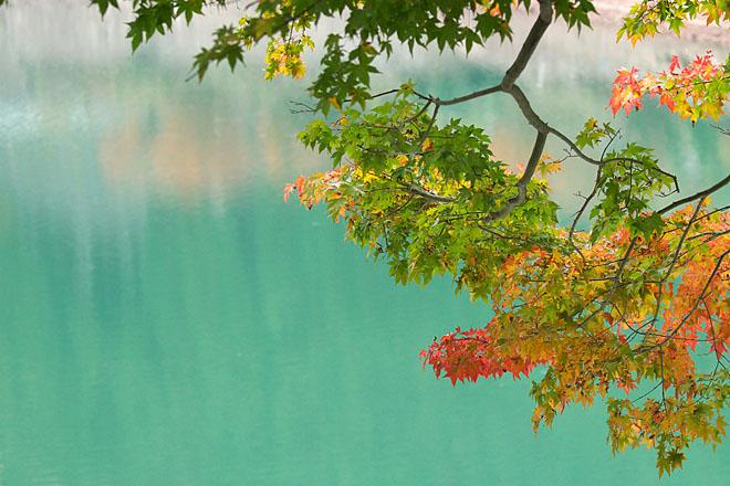 湖畔の秋~生野銀山湖~_c0067040_21571257.jpg