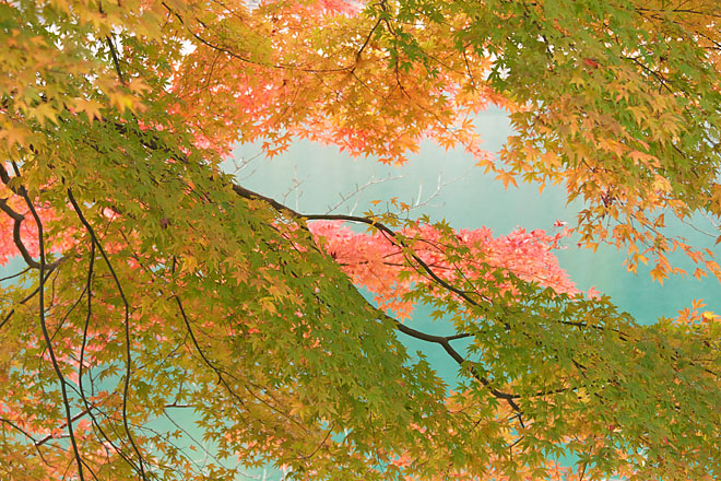 湖畔の秋~生野銀山湖~_c0067040_21572225.jpg