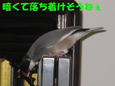 b0158061_20445696.jpg