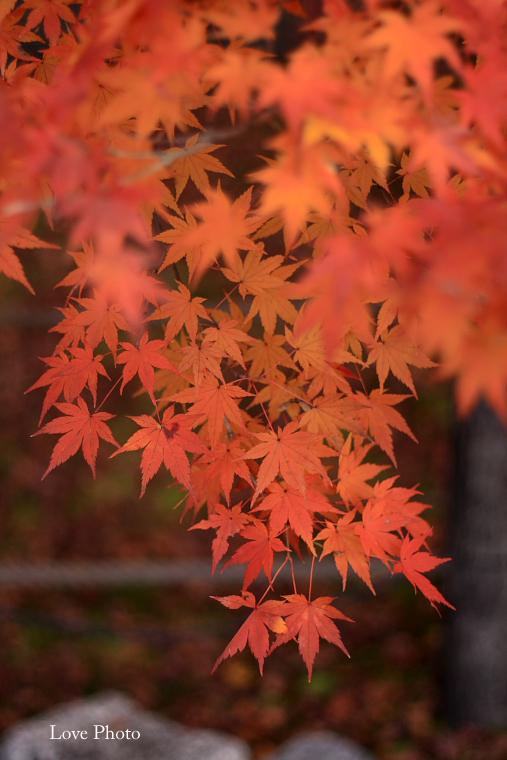 紅葉を求めて in 京都 ②_a0116472_12364773.jpg