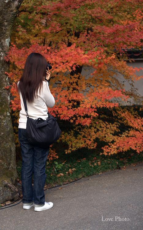 紅葉を求めて in 京都 ②_a0116472_12415689.jpg
