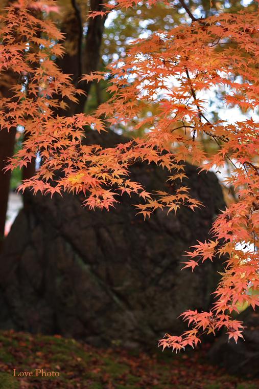 紅葉を求めて in 京都 ②_a0116472_1245292.jpg