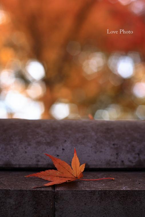 紅葉を求めて in 京都 ②_a0116472_1246255.jpg