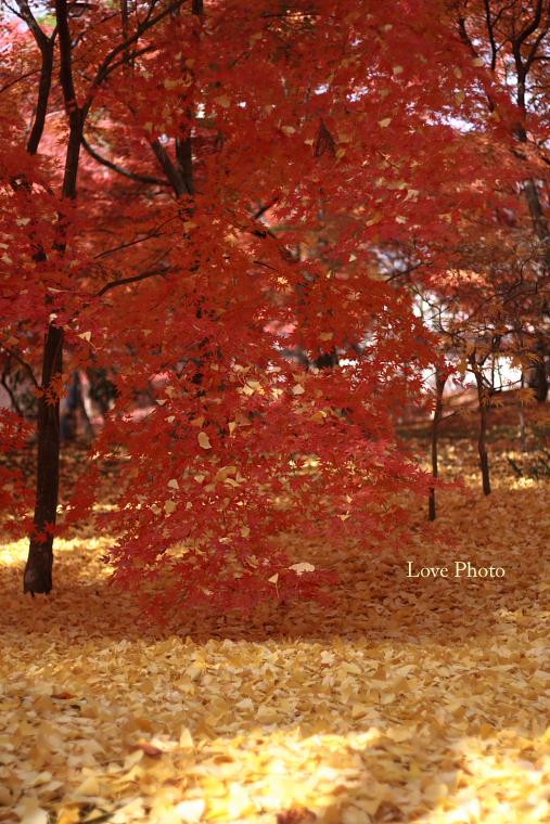 紅葉を求めて in 京都 ②_a0116472_130567.jpg