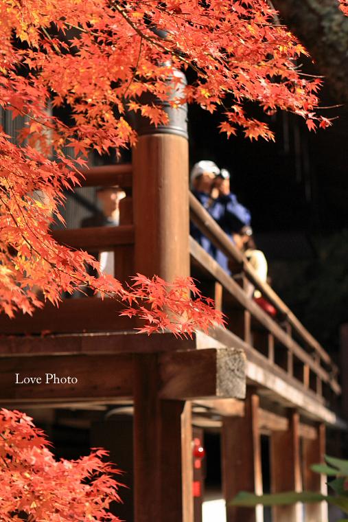 紅葉を求めて in 京都 ②_a0116472_1414926.jpg