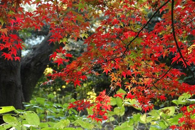 新宿御苑の紅葉 2009 (つづき)_f0012718_1916484.jpg
