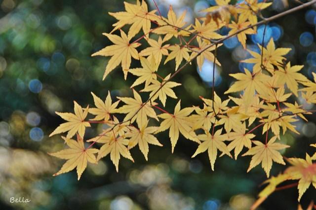 新宿御苑の紅葉 2009 (つづき)_f0012718_2052736.jpg