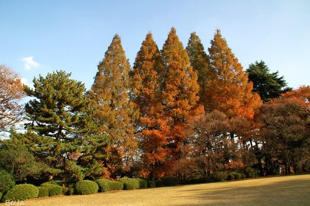 新宿御苑の紅葉 2009 (つづき)_f0012718_21284933.jpg