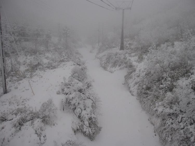 待望の天然雪_a0057828_16151364.jpg