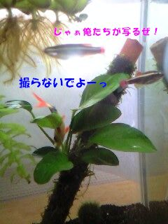c0223231_1025501.jpg