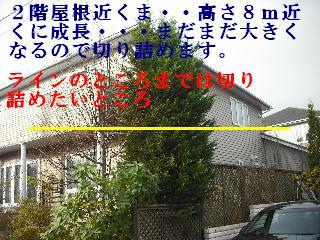 f0031037_186524.jpg