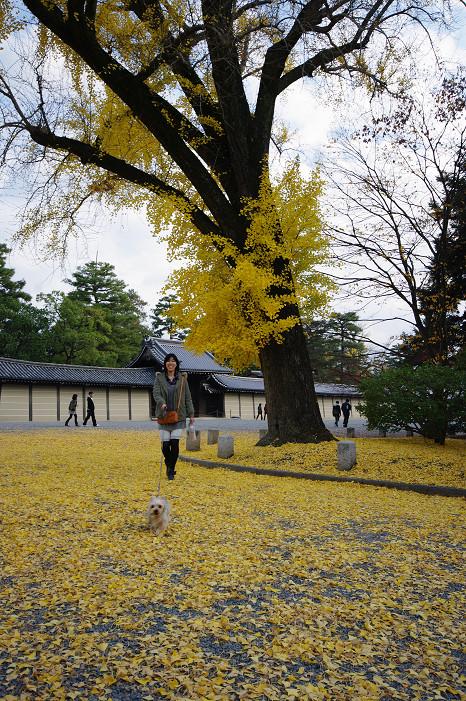 2009紅葉 Ⅹ(最終回) 京都御苑_f0152550_23473926.jpg