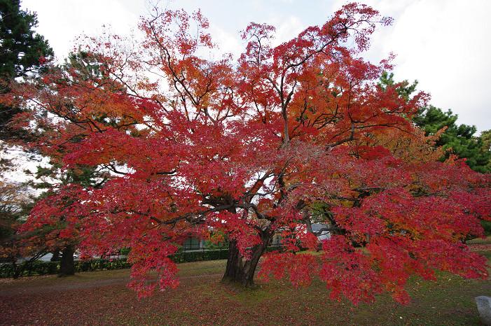 2009紅葉 Ⅹ(最終回) 京都御苑_f0152550_23475397.jpg