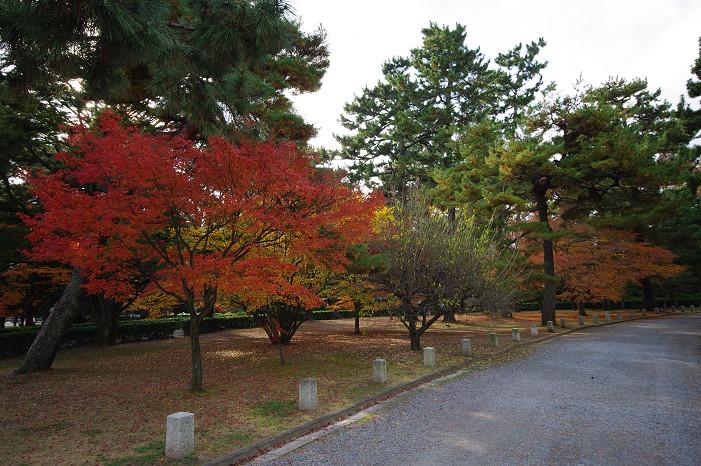 2009紅葉 Ⅹ(最終回) 京都御苑_f0152550_23475944.jpg