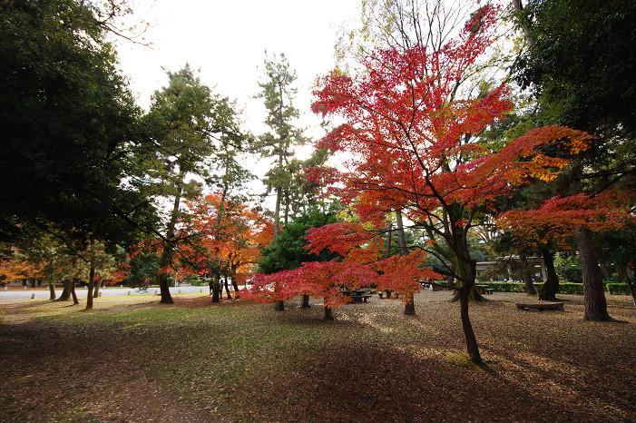 2009紅葉 Ⅹ(最終回) 京都御苑_f0152550_23481085.jpg