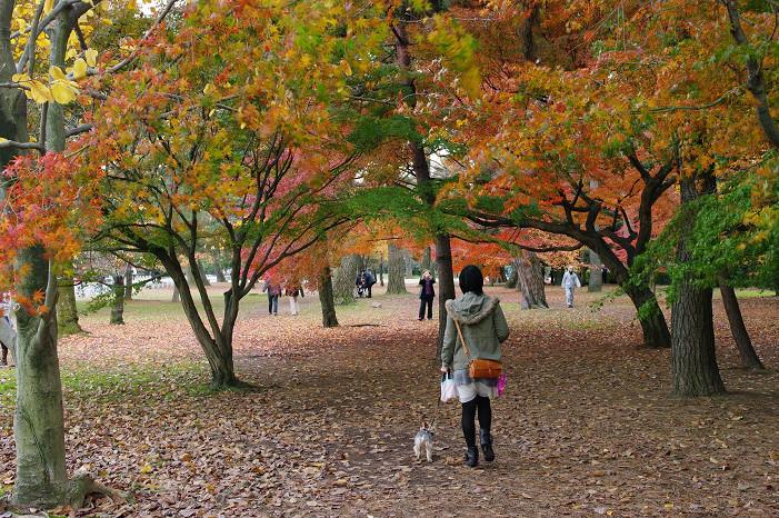 2009紅葉 Ⅹ(最終回) 京都御苑_f0152550_23482691.jpg