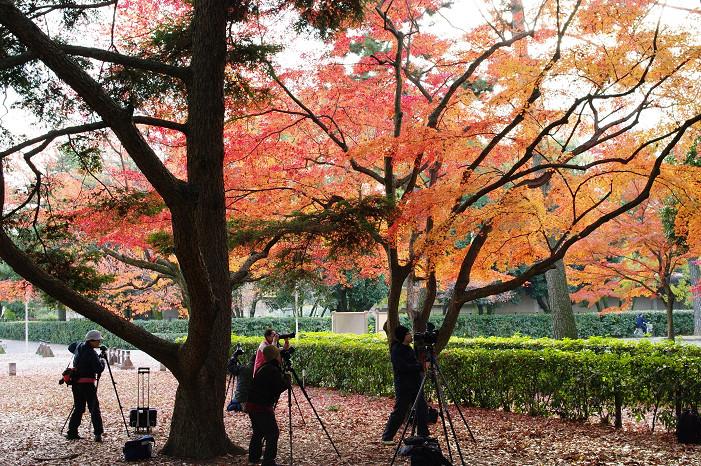 2009紅葉 Ⅹ(最終回) 京都御苑_f0152550_23483181.jpg