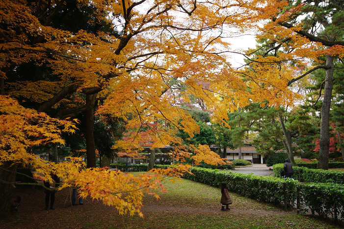 2009紅葉 Ⅹ(最終回) 京都御苑_f0152550_2348413.jpg
