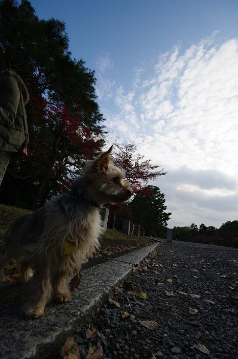 2009紅葉 Ⅹ(最終回) 京都御苑_f0152550_23484989.jpg