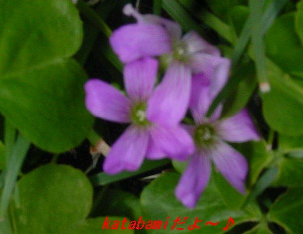 f0179357_0194249.jpg