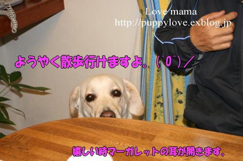 b0136683_1851239.jpg