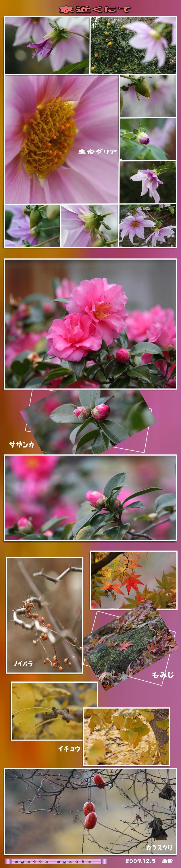 f0164592_1617590.jpg