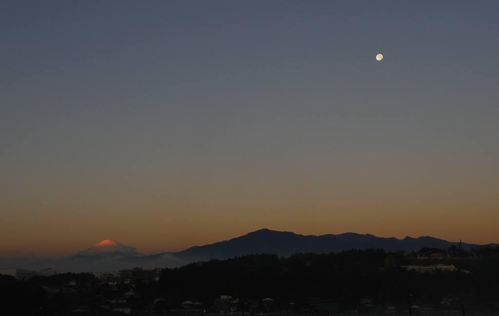 カシラダカ・ホオジロ/十六夜の残り月_b0024798_2034337.jpg
