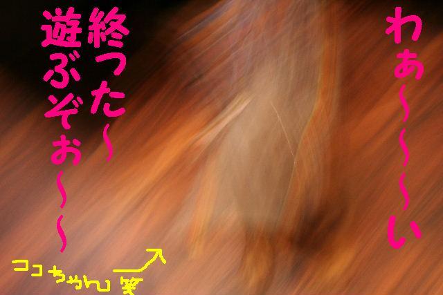 b0130018_170228.jpg