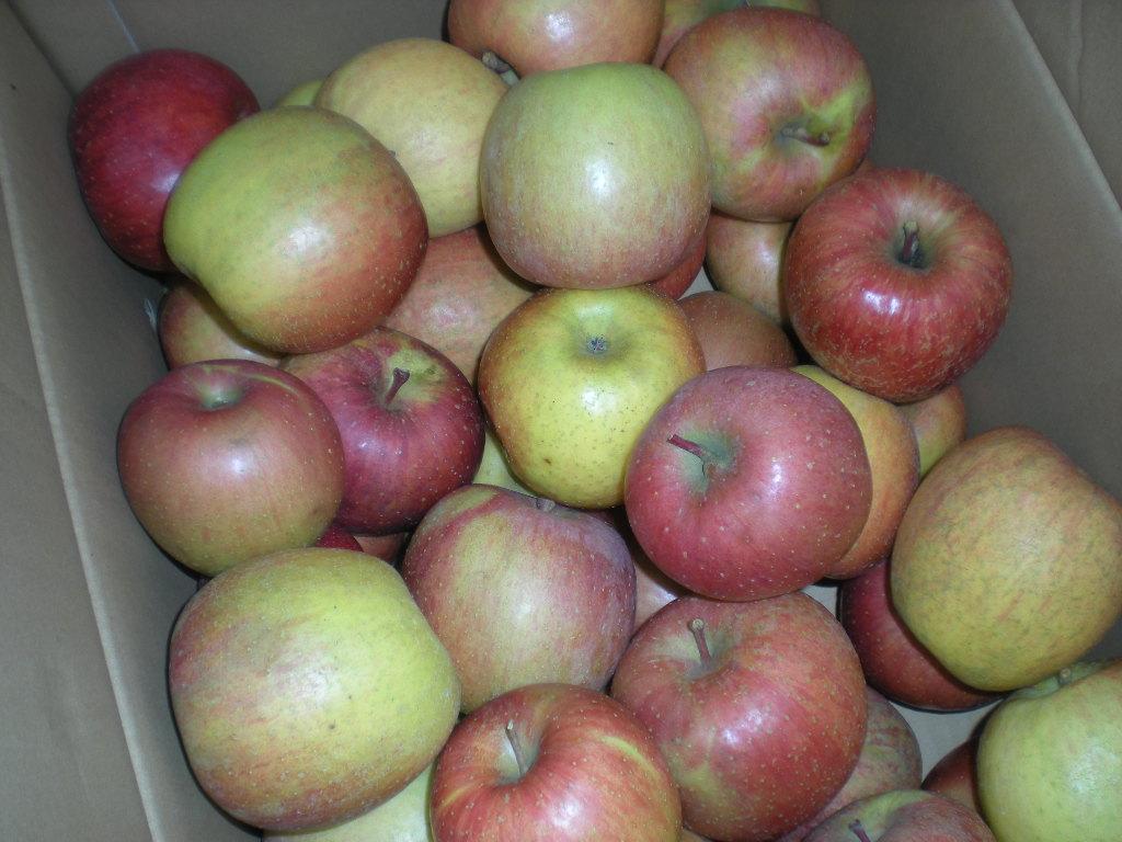 りんごの秘密~~_a0125419_16575913.jpg