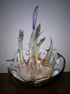 f0193429_0193849.jpg