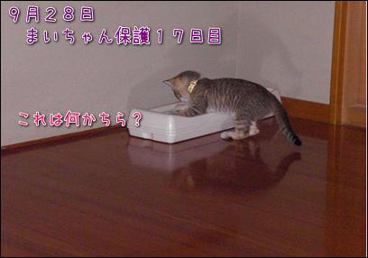 d0139352_0411069.jpg