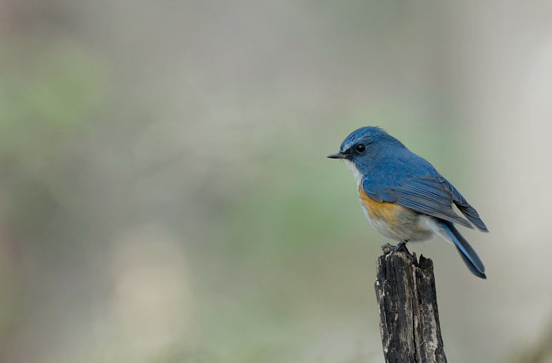 冬の青い鳥と赤い鳥_d0099854_195337100.jpg