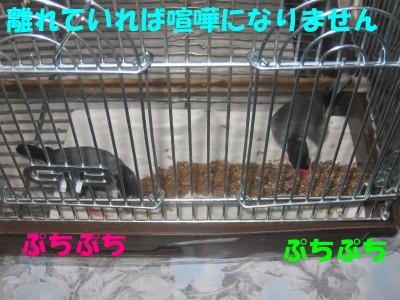 b0158061_20324363.jpg