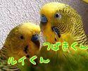 f0196665_2034339.jpg