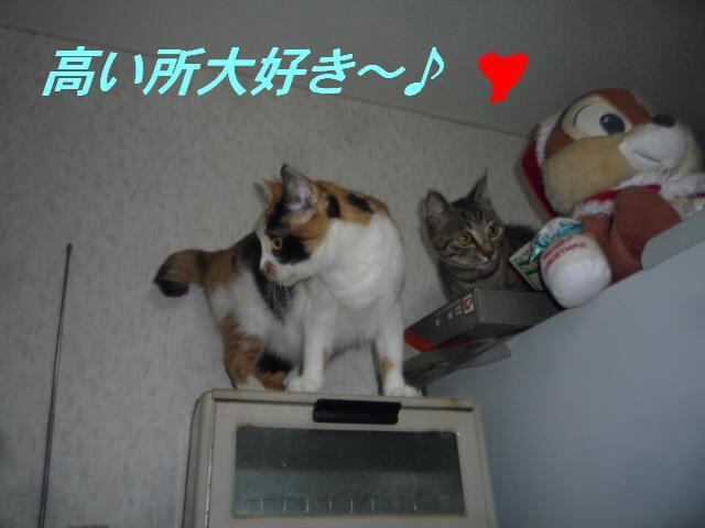 猫たちの好きなこと_b0112380_10454276.jpg