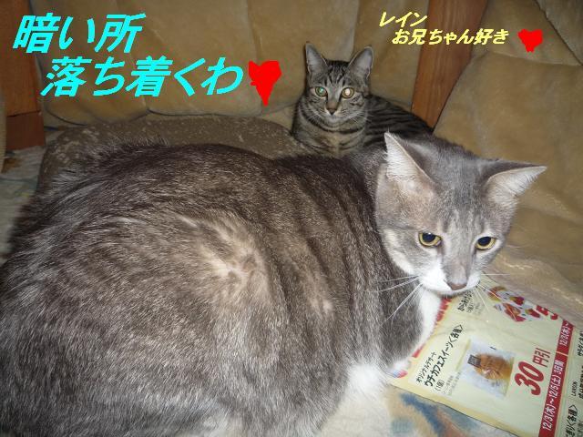 猫たちの好きなこと_b0112380_1048449.jpg